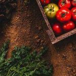 Guida alla scelta dei concimi organici per agricoltura biologica