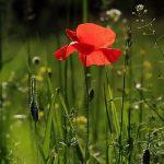 Tagliare l'erba alta: più facile e veloce con il decespugliatore