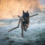 Assicurazione per il cane: cosa copre